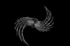Hystrix-cristata